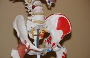 Anatomiczne biodro, model